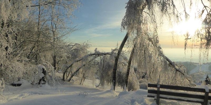 Gemeinde Schöfweg im Winter