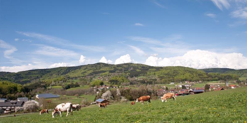 Die Landschaft und Natur von Zenting